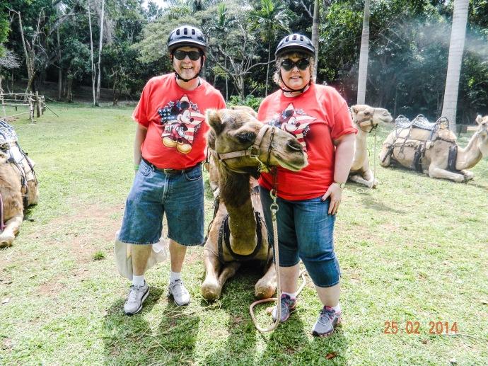 Camel Safari - Ocho Rios